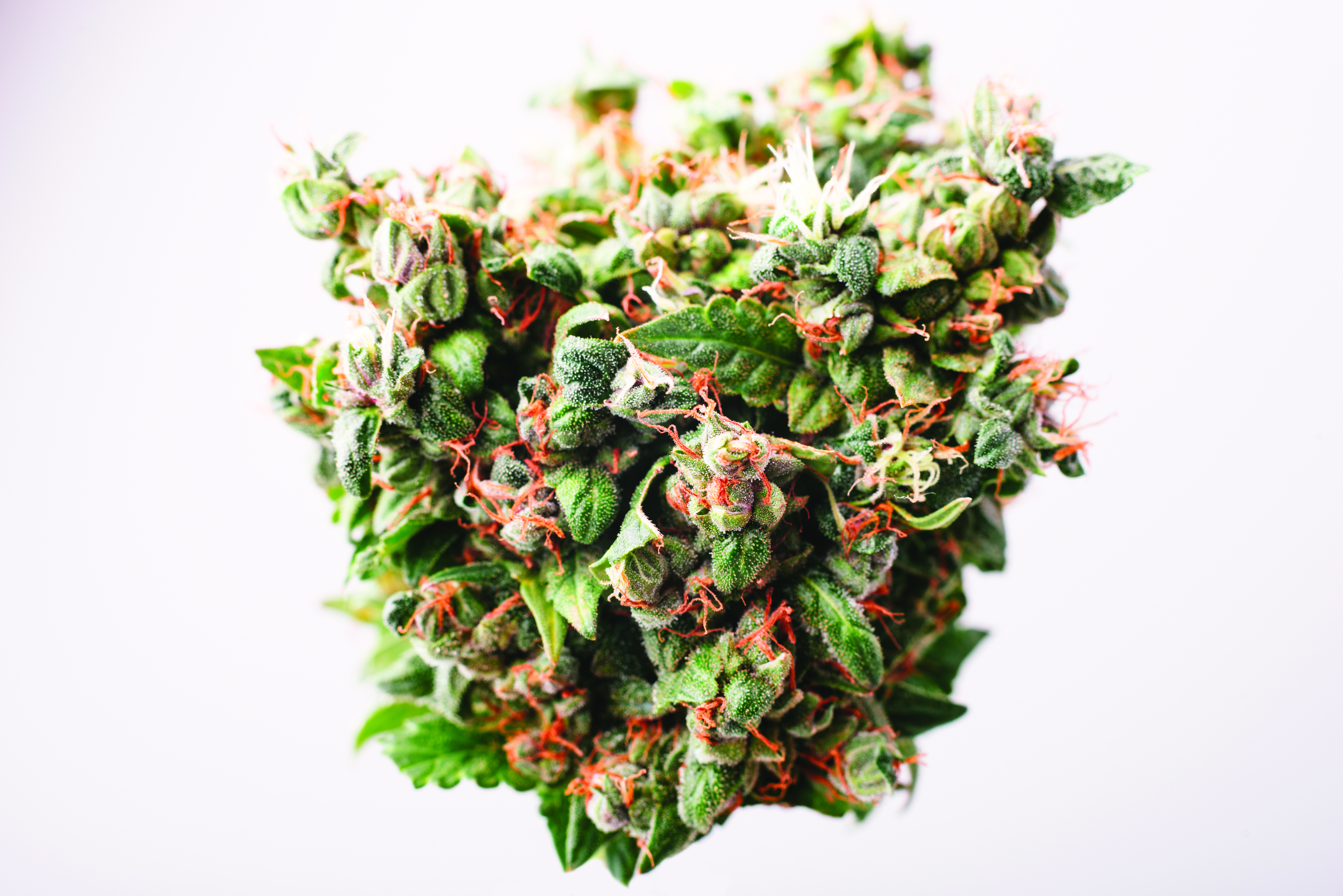 Dooby Do's and Don'ts: What you need to know about marijuana in Colorado