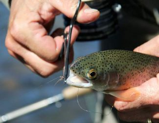 Fly-Fishing Guide: River report for Fourth of July weekend