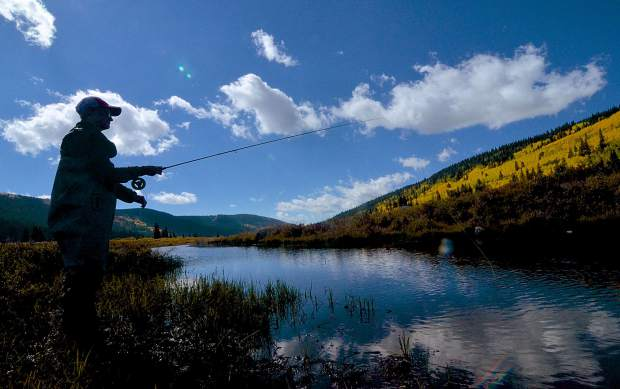 Donna Ventura of Los Alamos, New Mexico casts on a portion of the South Platte River just outside of Alma on Sept. 16. The area is a favorite for local fly-fishing guides like Breckenridge Outfitters thanks to a variety of waterways and stunning fall scenery.