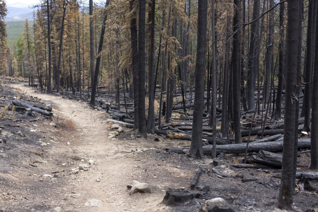 A burned forest on Miners Creek Trail caused by the Peak 2 Fire earlier this month Tuesday, July 25, near Breckenridge.