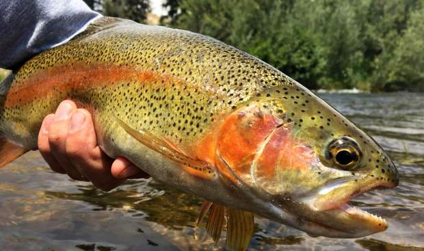 Colorado fishing report for week July 31 to Aug. 3