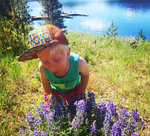 A stash of wild lupine flowers found near the Dillon Marina. It's peak wildflower season in Summit County. Submit your wildflower photos to share@summitdaily.com or use our hashtag, #exploresummit.