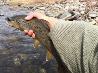 Fly-Fishing guide: River report for Labor Day weekend