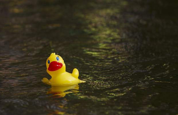 Duck race makes more money for foundation than ever before ...