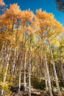 Why do leaves change color? The science behind fall foliage and best places to view around Summit County