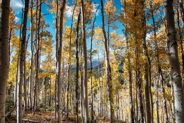 Aspen Alley trail near Boreas Pass on the south side of Breckenridge is a great hiking or biking trail to see fall colors.