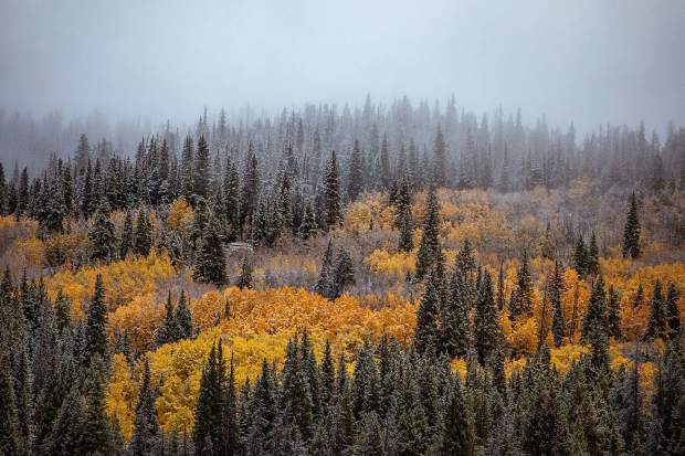 Snow and aspen trees Saturday at Copper Mountain.