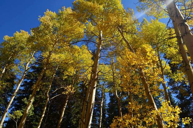 Best fall hikes for aspen leaves in Summit County (before they're gone!)