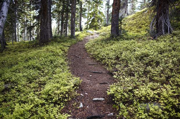 Trail leading between Willow Lakes in high elevation of the Eagles Nest Wilderness Saturday, Sept. 16, near Silverthorne.