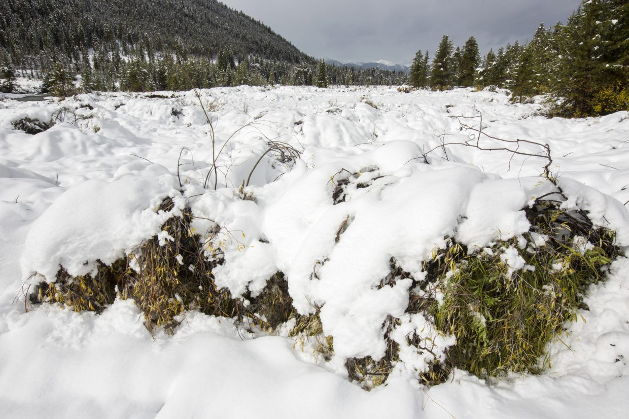 Field of shrubs covered in snow Monday, Oct. 2, at Keystone.