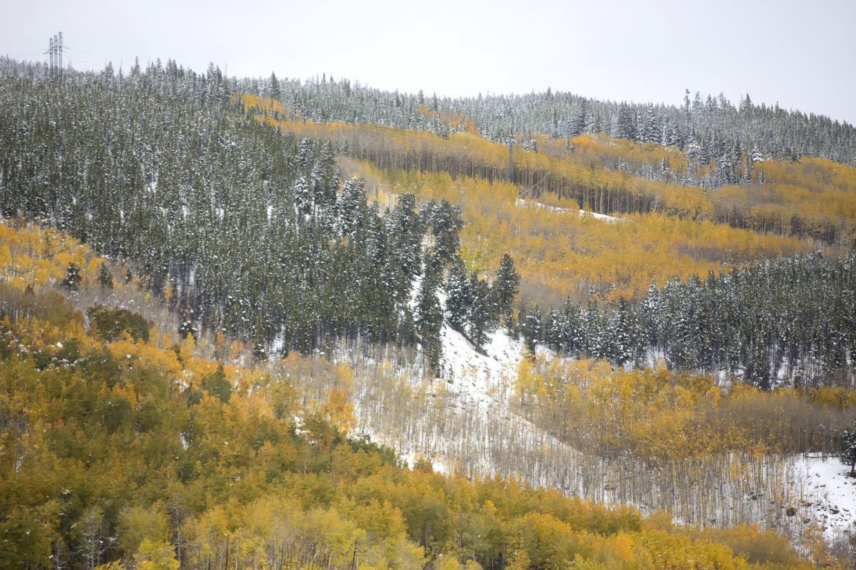 Aspen Trees and pine trees mix in the snow Monday, Oct. 2, at Keystone.