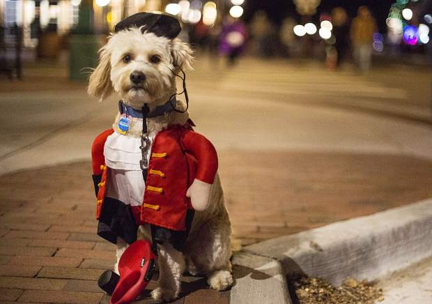 Mischief, a labradoodle dressed as a pirate, Tuesday evening, Oct. 31, in Frisco.