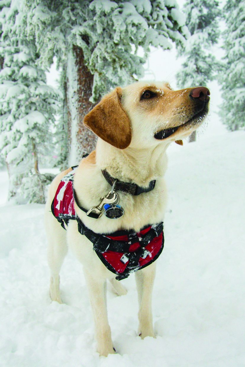 Jackson is an avalanche rescue dog at Keystone.