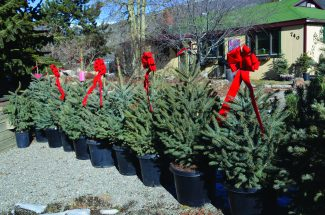 Deck the Halls: Gathering your holiday greenery in Summit County