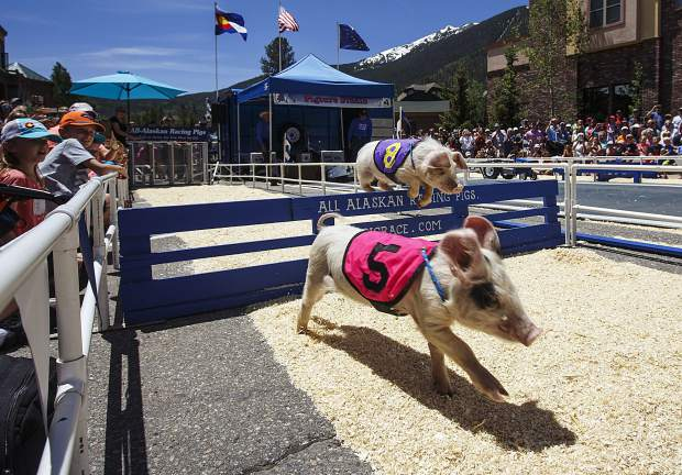 Pigs race during the annual Colorado BBQ Challenge Friday, June 16, on Main Street in Frisco.