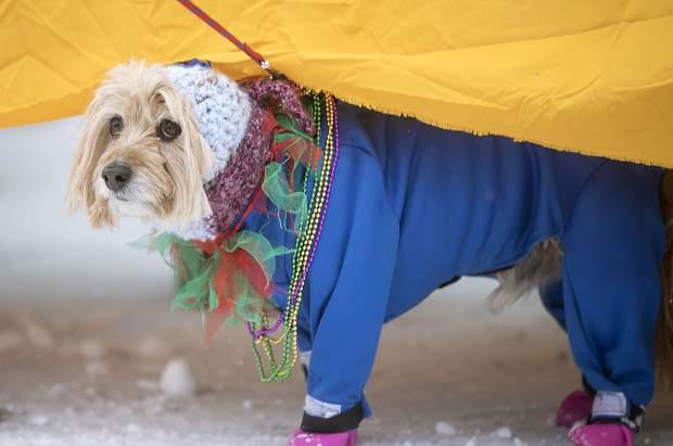 A parade attendant attempts to stay warm under the table during the Mardi Gras 4Paws Parade Saturday, Feb. 10, along Main Street in Frisco.