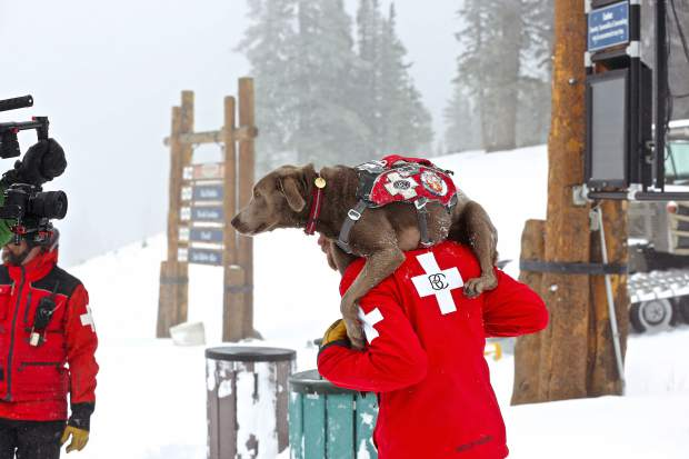 Beaver Creek Ski Patrol currently has five avalanche dogs on staff — two certified, two semi-retired and one in training. The dogs are friendly, slobbering faces on Beaver Creek, but their skills are used by HAATS, the Sheriff's Office and Vail Mountain Rescue to assist with backcountry rescues.