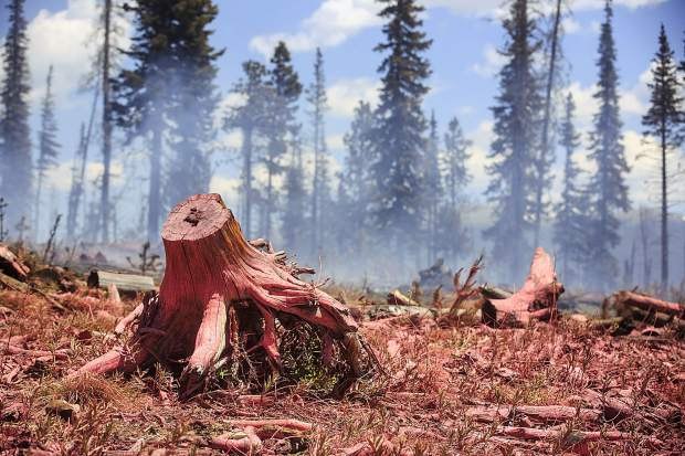 Stumps and other older logs is covered in flame retardant materials dropped in by aircraft at the Buffalo Fire site Wednesday, June 13, near Silverthorne.