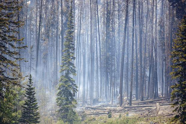 Tree burned at the Buffalo Fire site Wednesday, June 13, near Silverthorne.