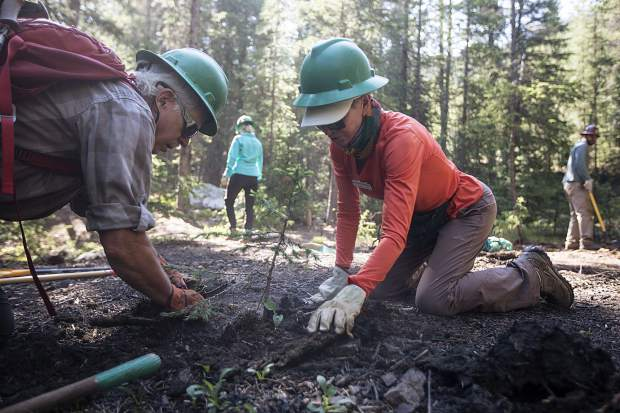 Volunteers Dave Brewster, left, of Dillon, and Bonnie Guthrie, of Silverthorne, set the newly transported tree during a a restoration program led by Friends of the Dillon Ranger District Friday, July 6, along Peru Creek near Montezuma.