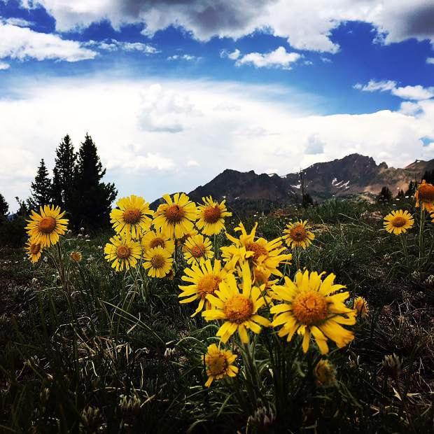 Flowers seen on Gore Range to Red buffalo Pass.