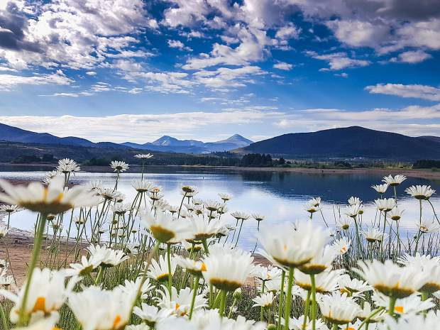 Flowers along Lake Dillon.
