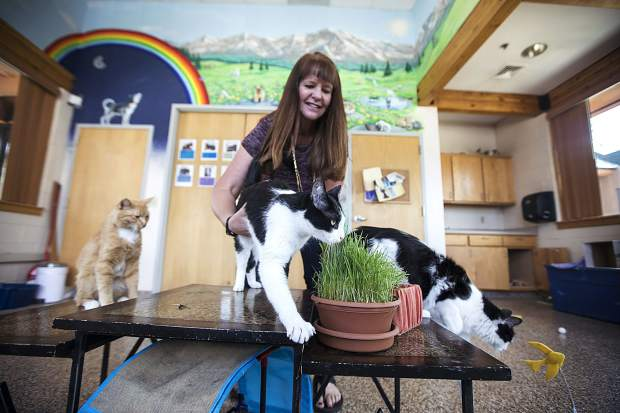 Cats from left to right, Noodles, Aries, and Arlo at the Summit County Animal Control and Shelter with director Lesly Hall Friday, July 13, in Frisco. Five cats were transferred to the shelter in Frisco from Glenwood Springs due to wildfire.