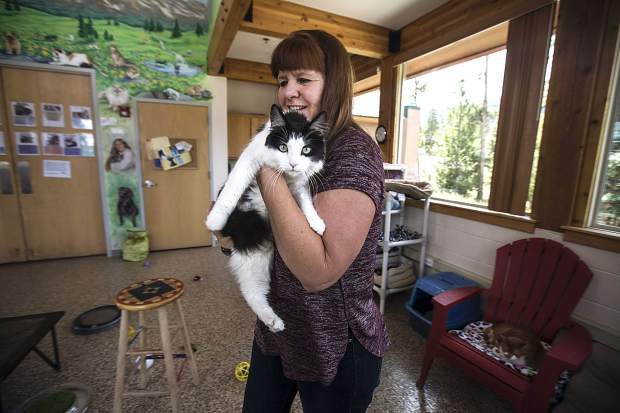 Summit County Animal Control and Shelter director Lesly Hall carries a male cat, Arlo, Friday, July 13, in Frisco. Five cats were transferred to the shelter in Frisco from Glenwood Springs due to wildfires.