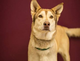 Summit County adoptable pets