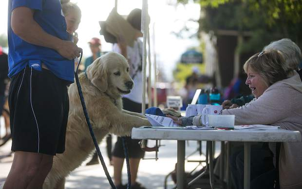 Ladybug, a golden retriever, registers for the LAPS K94K run and walk fundraiser Saturday, Aug. 4, on Frisco's Main Street.
