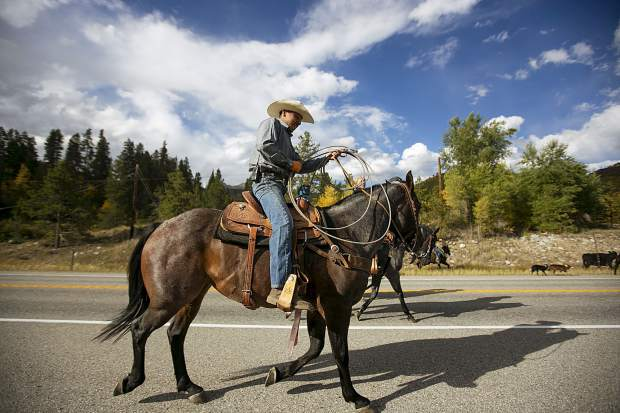 Cowboy Gustavo Lara pushes the cattle on Highway 9 Tuesday, Sept. 11, between the two ranches north of Silverthorne.