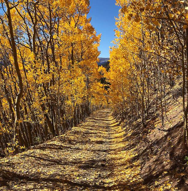 Fall leaves while biking in Breckenridge.