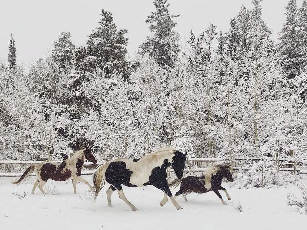 Horses run in first snowfall of the season.
