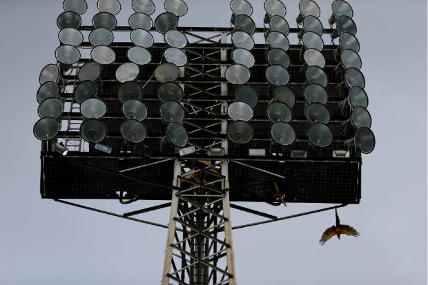 Parrots fly out from under a light tower during the baseball season's opening game between Leones de Caracas and Tiburones de la Guaira in Caracas, Venezuela on Friday. Venezuela is scheduled to host the Caribbean Series in February 2019 in the city of Barquisimeto, one of the city's hardest hit by power outages that have roiled much of the country.