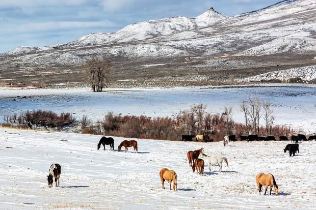 Horse and Cattle Ranch along Heeney Road in Northern Summit County.