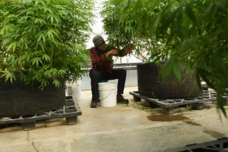 Hemp taking off as viable product, and Colorado entrepreneurs are at the forefront of industry