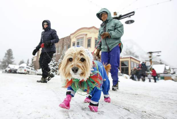 People and their dogs attend the Mardi Gras 4Paws Parade Saturday, Feb. 10, along Main Street in Frisco.
