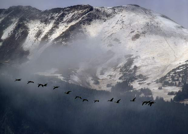 Geese fly in migrating patterns in front of the snow blanketed Red Peak Thursday afternoon, Oct. 4, 2018 near Silverthorne, CO.