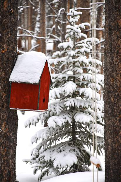 A snow-covered birdhouse in the photographer's backyard in Blue River.