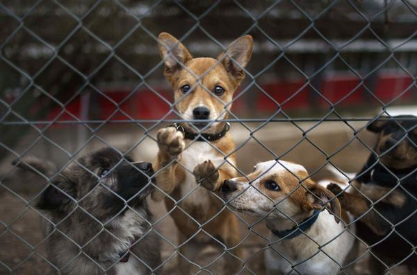 Colorado lawmaker wants to bar convicted animal abusers from owning pets
