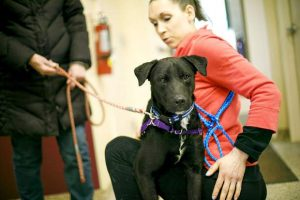 Summit County's adoptable pets for the week of Feb. 25