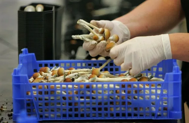 Psychedelic mushrooms just put Denver at the center of the national drug debate — again