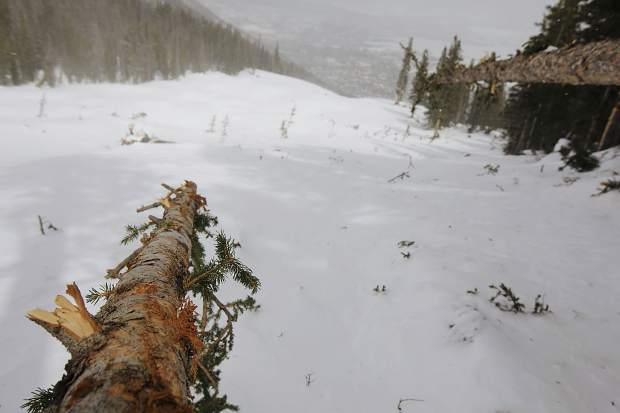 A forest cleared by an avalanche that occurred in early March seen on March 23, below Peak One near Frisco.
