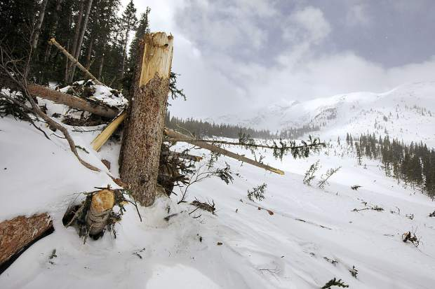 Large old growth trees, seen on March 23, destroyed by an avalanche started near the ridge line, seen in the photo, and traveled to near Rainbow Lake below Peak One near Frisco.