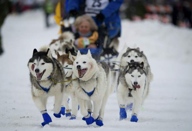 Eagle River, Alaska musher Tom Schonberger's lead dogs trot along Fourth Avenue during the ceremonial start of the Iditarod Trail Sled Dog Race in Anchorage, Alaska in March 2018. The world's foremost sled dog race kicks off its 47th running this weekend on Saturday as organizers and competitors strive to push past a punishing two years for the image of the sport.