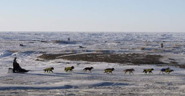 Mats Pettersson, of Sweden, mushes along the frozen Bering Sea coast outside Nome, Alaska in March 2016. He finished in 27th position in the Iditarod Trail Sled Dog Race. Technology is used to track Alaska's Iditarod Trail Sled Dog Race far from the competitors tackling the off-the-grid route. Their progress is monitored from several hotel rooms in Anchorage whose 24/7 occupants are the Iditarod's electronic eyes and ears.