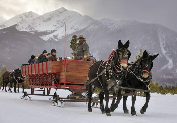Two Below Zero sleigh driver Aaron Byrne leads the mules, Matthew and Roy, during a tour Feb. 28, on the Frisco Peninsula.