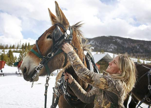 Two Below Zero driver Bree Thoma gears up a mule, Johnny, ahead of a tour Thursday, Feb. 28, on the Frisco Peninsula.