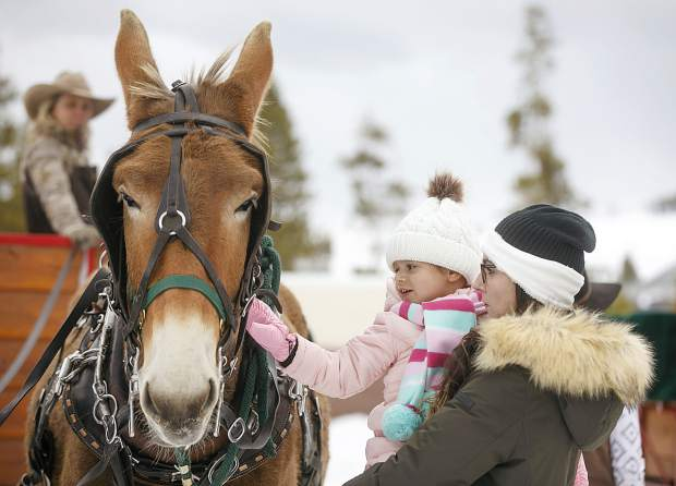 Two Below Zero guests interact with Johnny, a mule, before the sleigh ride Thursday, Feb. 28, on the Frisco Peninsula.
