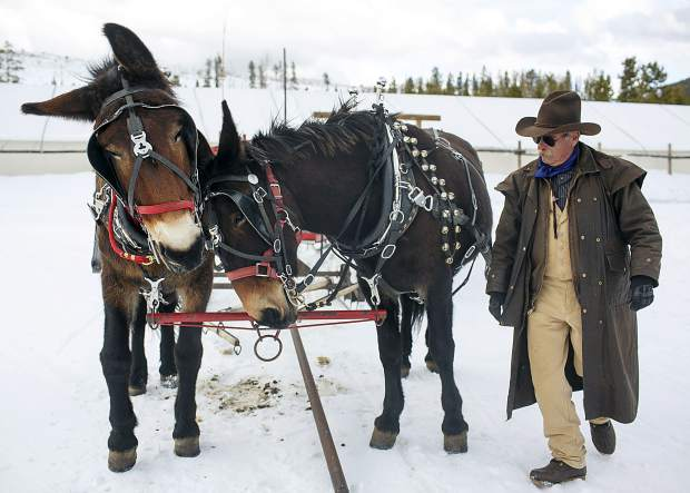 Sunny, a mule, rubs his head against Bright as Two Below Zero sleigh driver Bob Dillon prepares them for a sleigh ride for clients Thursday, Feb. 28, on the Frisco Peninsula.